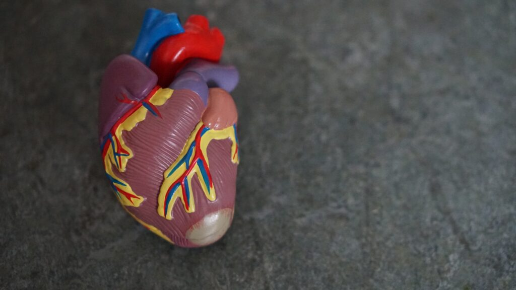 心臓のリモデリングとは?
